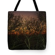 Sunset At The Presidio   Tote Bag