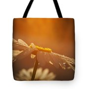 Sunset Daisy Tote Bag