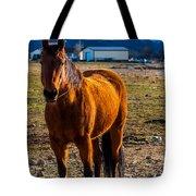 Sunset Bay Horse Heber Valley Utah Tote Bag