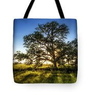 Sunset Oak Tote Bag