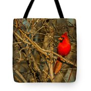 Sunset On A Norhern Cardinal Tote Bag