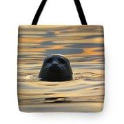 Sunset Seal Tote Bag