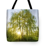 Sunset Willow Tote Bag