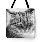 Surprised Cat Tote Bag
