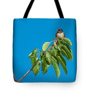 Swallow Sitting On Cherry Tree Branch Tote Bag