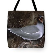 Swallow-tailed Gull And Chick Calling Tote Bag by Tui De Roy