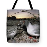 Swallow-tailed Gull And Chick In Pebble Tote Bag by Tui De Roy