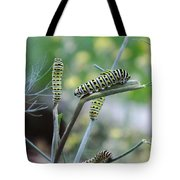 Swallowtail Caterpillars On Dillweed Tote Bag