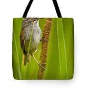 Swamp Sparrow Pictures Tote Bag
