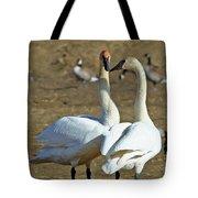 Swan Pair Tote Bag