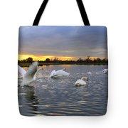 Swans At Sunset Tote Bag