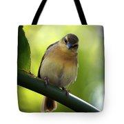Sweet Bird On Branch Tote Bag