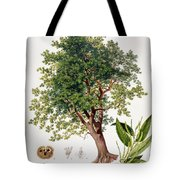 Sweet Chestnut Tote Bag by Johann Kautsky