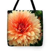 Sweet Dahlia Tote Bag