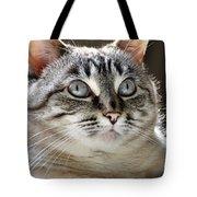 Sweet Innocence Tote Bag