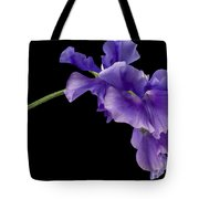 Sweet Pea Study Tote Bag by Anne Gilbert