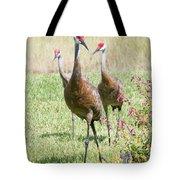 Sweet Sandhill Crane Family Tote Bag