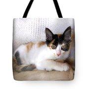 Sweet The Kitten Tote Bag