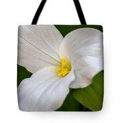 Sweet White Trillium 5 Tote Bag