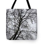 Sweetgum Silhouette On A Rainy Day Tote Bag