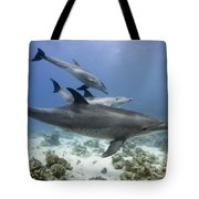 swimming Bottlenose dolphins Tote Bag