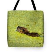 Swimming In Pea Soup - Baby Muskrat Tote Bag