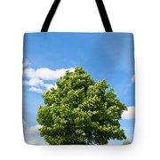 Sycamore  Acer Pseudoplatanus Tote Bag