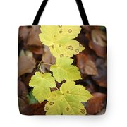 Sycamore Leaves Germany Tote Bag