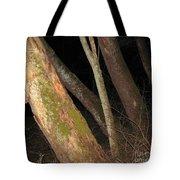 Sycamore Nightscape Tote Bag