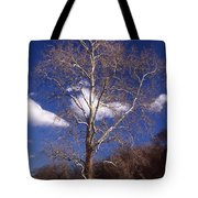 Sycamore On The Hill Tote Bag
