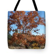 Sycamore Tree In Fall Colors Tote Bag