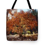 Sycamore Trees Fall Colors Tote Bag
