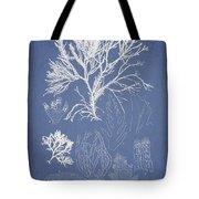 Symphocladia Gracilis  Tote Bag by Aged Pixel