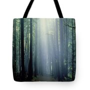 T. Bonderud Path Through Trees In Mist Tote Bag by First Light