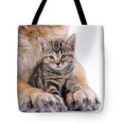 Tabby Kitten Between Large Dogs Paws Tote Bag