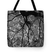 Tabebuia Tree 1 Tote Bag