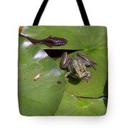 Tadpole And Frog Tote Bag