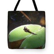 Tadpole On Lily Pad Tote Bag
