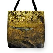 Tadpole Tail Tote Bag