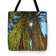Tahoe Trees - Lake Tahoe By Diana Sainz Tote Bag