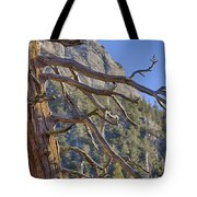 Tahquitz And The Pine Tote Bag