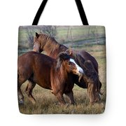 Tail Chasing Tote Bag