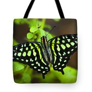 Tailed Jay Butterfly  Tote Bag
