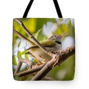 Tailor Bird Tote Bag