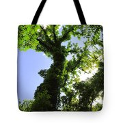 Tall Trees Tote Bag