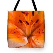 Tangerine Daylily Closeup Tote Bag