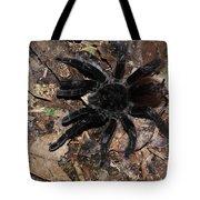 Tarantula Amazon Brazil Tote Bag