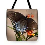 Tattered Tails Tote Bag