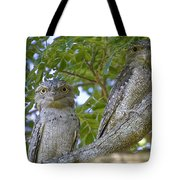 Tawny Frogmouths Tote Bag