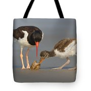 Teaching The Young Tote Bag
